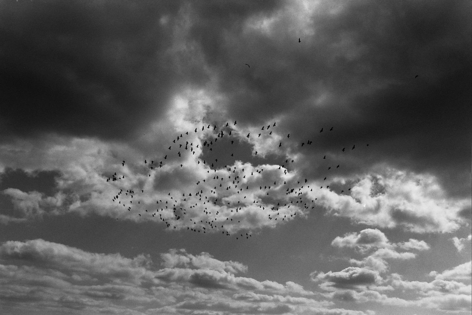 © Lisa Strautmann